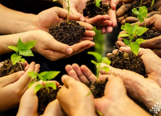 Planting tree and save environment